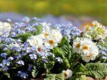 Mit einem Blumenbeet den Garten verschönern