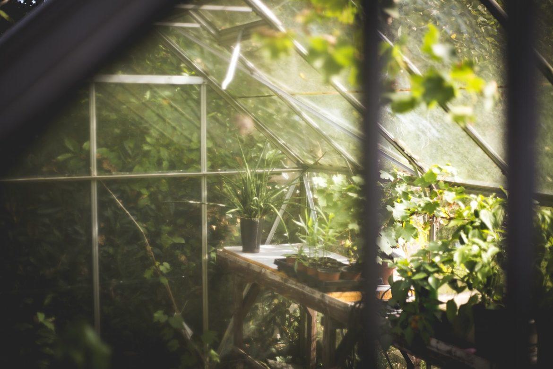 Gewächshaus mit Gemüse für den Winter